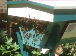 bees, top bar hive, beekeeping