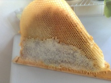 bees, beekeeping, honey, comb, bee hive