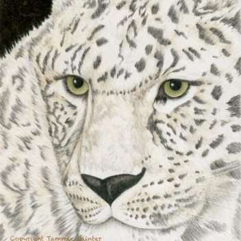 "SOLD""Borris"" 8x10"" Colored Pencil on Strathmore Colored Pencil Paper"