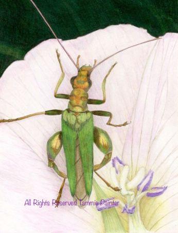 """Green Bug"" 8x10"" Colored pencil on Bristol"
