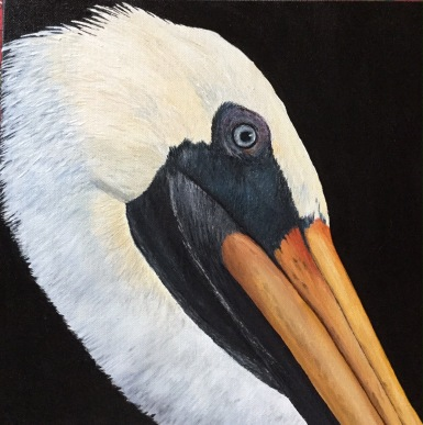 """Mr. Pelican"" 12x12"" Acrylic Paint on Canvas"