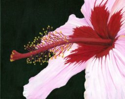 """Pink Hibiscus"" Acrylic on Panel 8x10"""