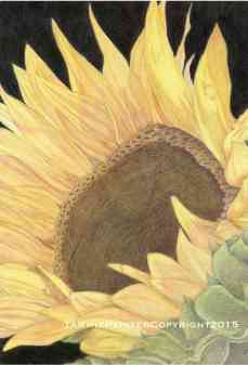 """Sunflower"" 11x14"" Colored pencil on Drawing Paper"
