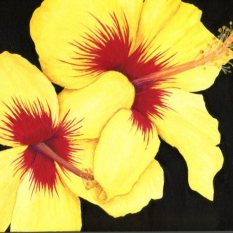 """Yellow Hibiscus""Acrylic on Panel 8x10"