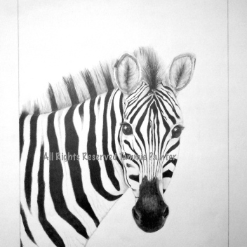 "SOLD ""Zebra"" 12x18"" Graphite on Drawing Paper"