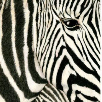 """Stripes"" 8X10"" Colored Pencil on Bristol"