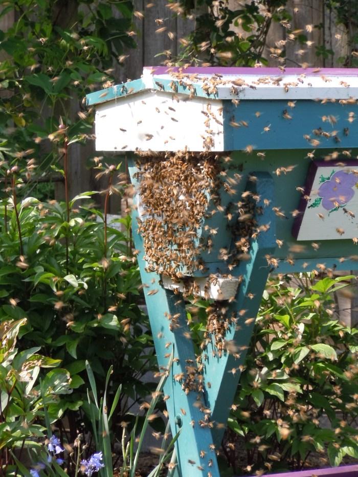 bees, beekeeping, top bar hive, bee swarm