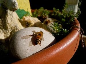 bee, beekeeping