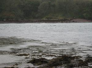 Ireland, dolphin, fungi, fungie, dingle, irish