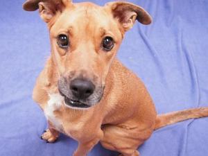 dog, oregon humane society