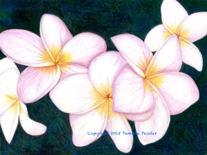 colored pencil art, plumeria