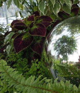 seattle, volunteer park conservatory, coleus, tropical plants