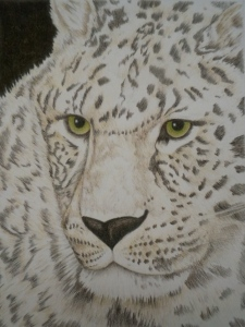 Colored Pencil, wildlife art, borris oregon zoo, amur leopard, coloured pencil