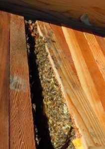 bees, beekeeping, top bar hive