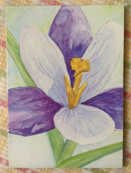 watercolor, saffron, botanical art