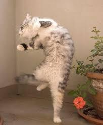 Advanced Happy Dancing