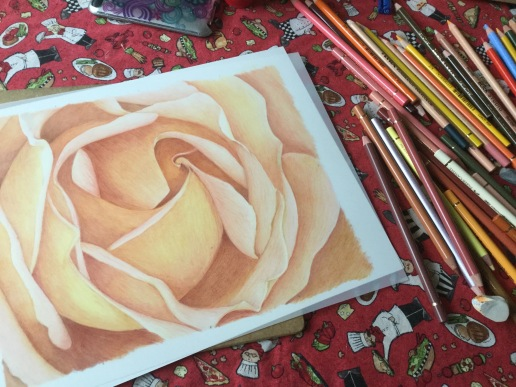 colored pencil, coloured pencil, art, botanical art