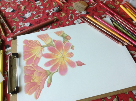 My latest work on bristol. Each petal has about ten layers of pencil.