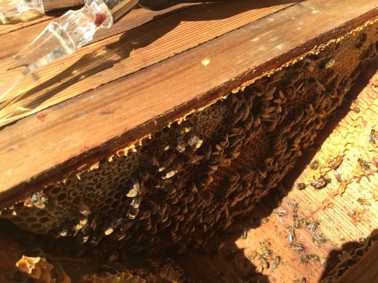 bee, beekeeping, top bar hive