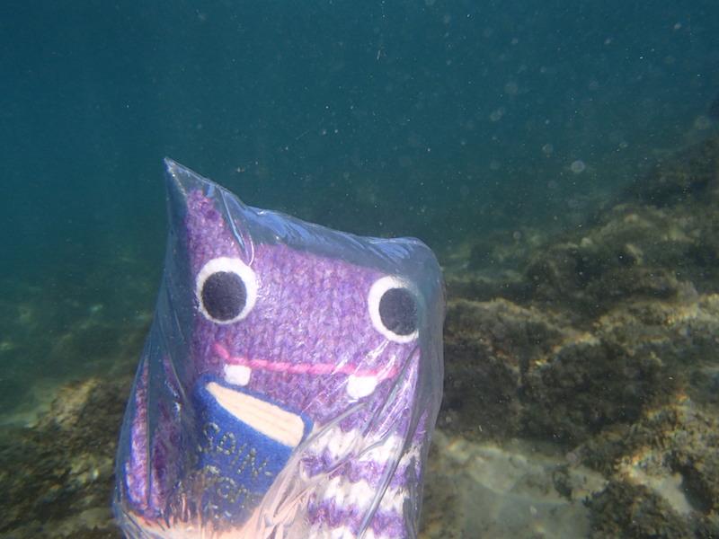 maui, kapalua bay, finn mcspool, hawaii, snorkel