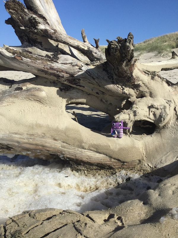 Finn McSpool, Oregon, Oregon Coast, Bay Ocean