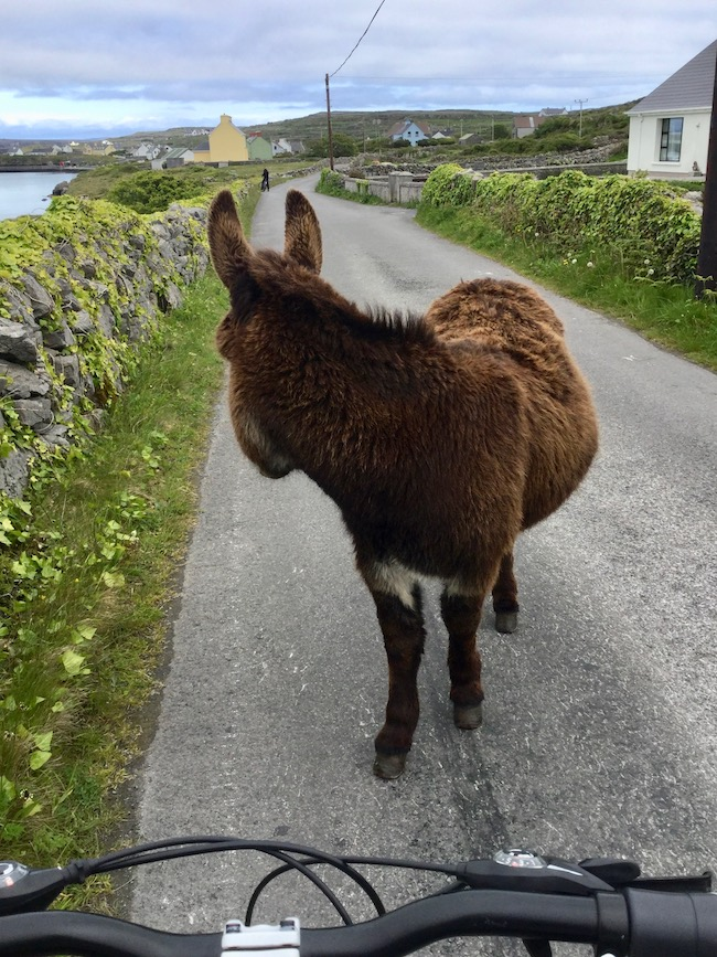inishmore, aran islands, donkey