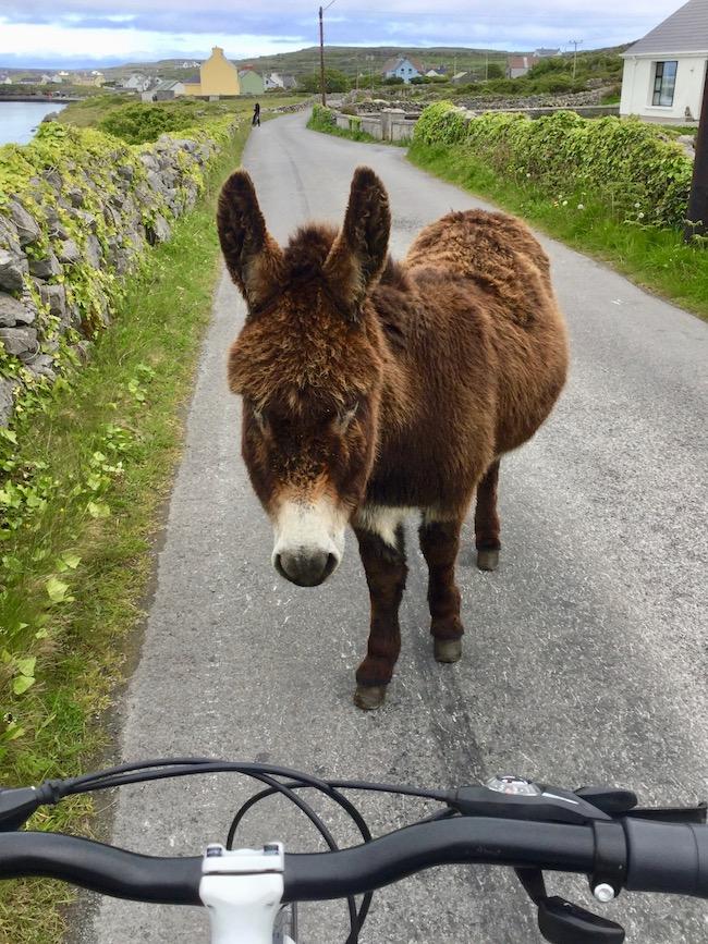 inishmore, aran islands, donkey