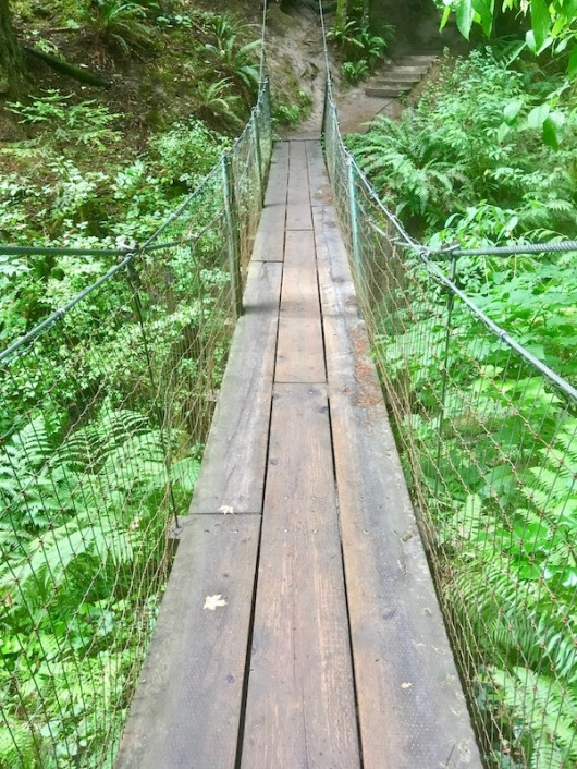 tyron creek state park, portland, oregon